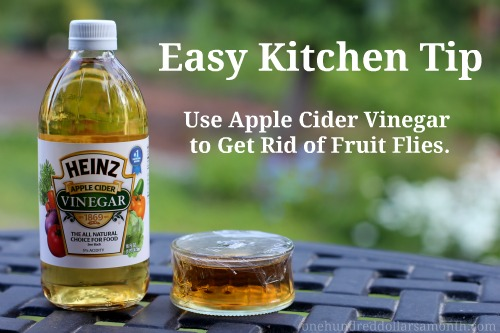Get Rid of Gnats with Vinegar